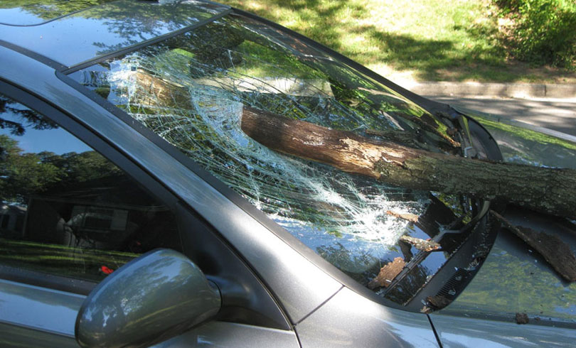 auto glass mobile service fixed windshield broken by tree falling